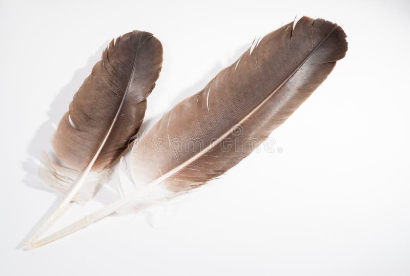 Dwa Eagle piórka zdjęcie royalty free