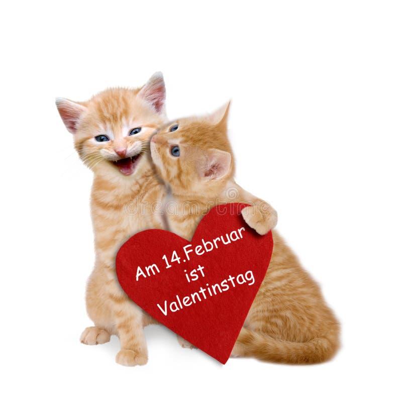Dwa enamored kota z czerwonym sercem na valentine obraz stock