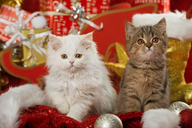 Dwa figlarka z boże narodzenie dekoracją zdjęcia stock
