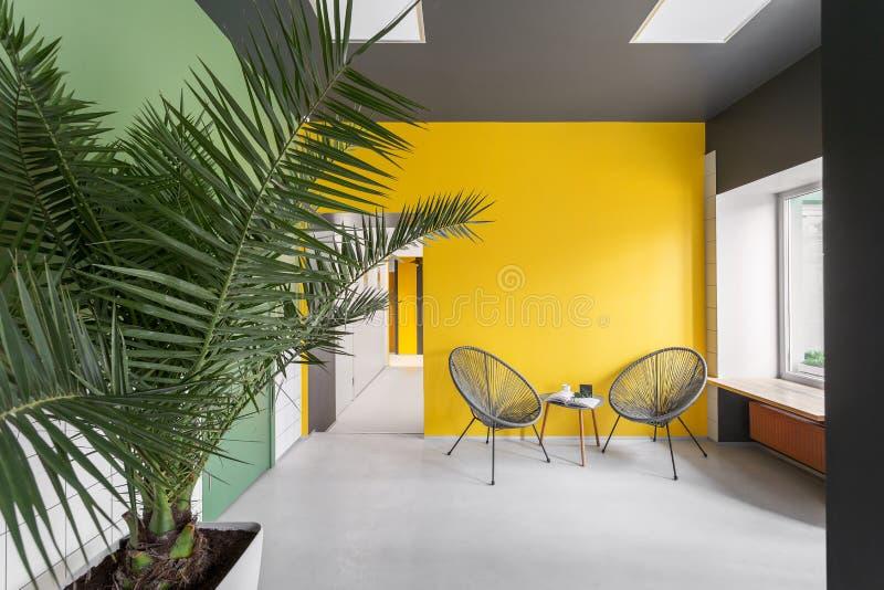Dwa fotele na żółtej ścianie Grafika, styl, minimalizm, styl skandynawski Duża roślina domowa, palma we wnętrzu zdjęcie stock