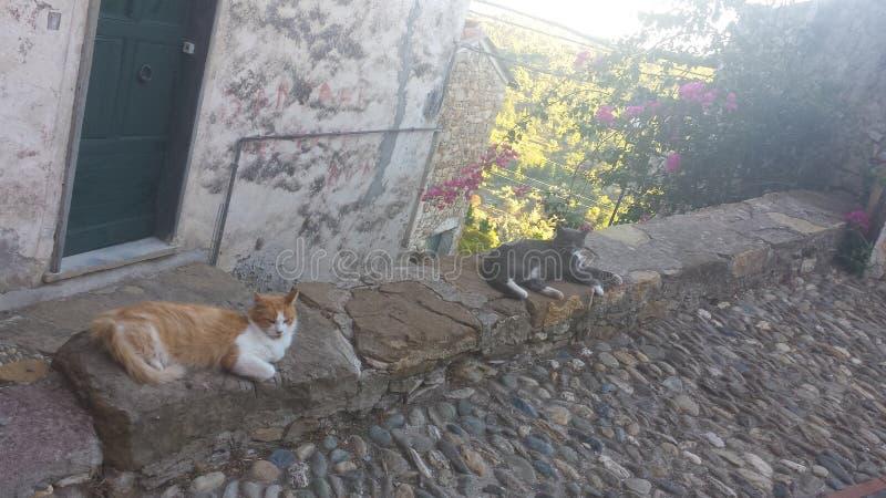 Dwa gnuśnego kota zdjęcia royalty free