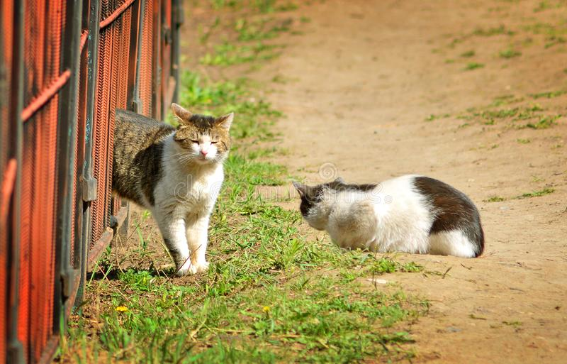 Dwa gnuśnego ulicznego kota na ziemi obrazy royalty free