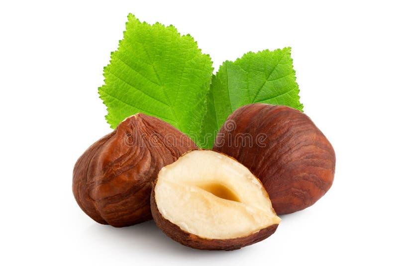 Dwa i przyrodni hazelnuts z liśćmi na bielu skóry i zieleni zbli?enie obraz stock