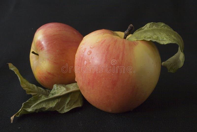 dwa jabłka zdjęcie royalty free