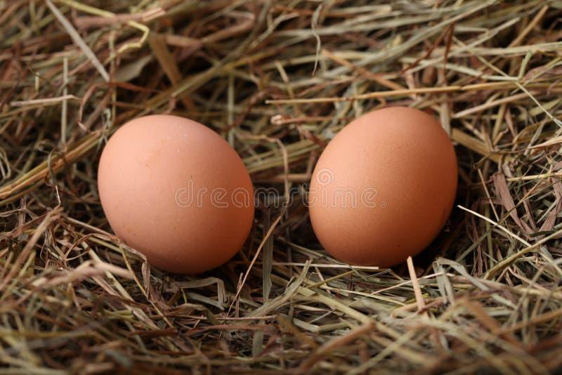 Download Dwa jajka obraz stock. Obraz złożonej z farm, jajka, zwierzę - 28960431