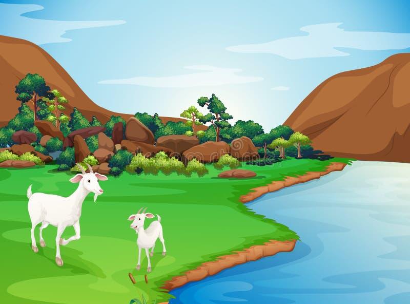 Dwa kózki przy riverbank ilustracji