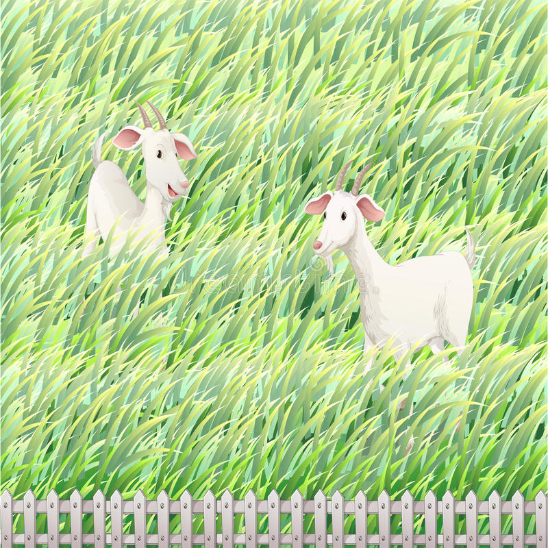 Dwa kózki w gospodarstwie rolnym ilustracja wektor