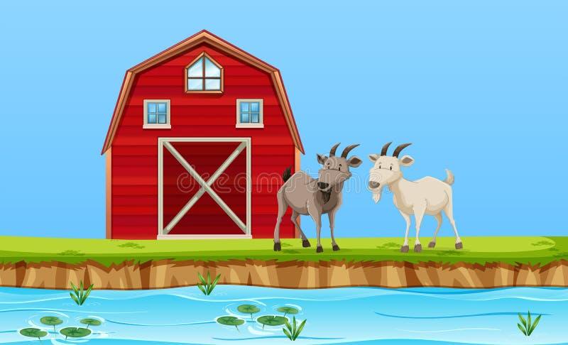 Dwa kózki w rolnej scenie royalty ilustracja