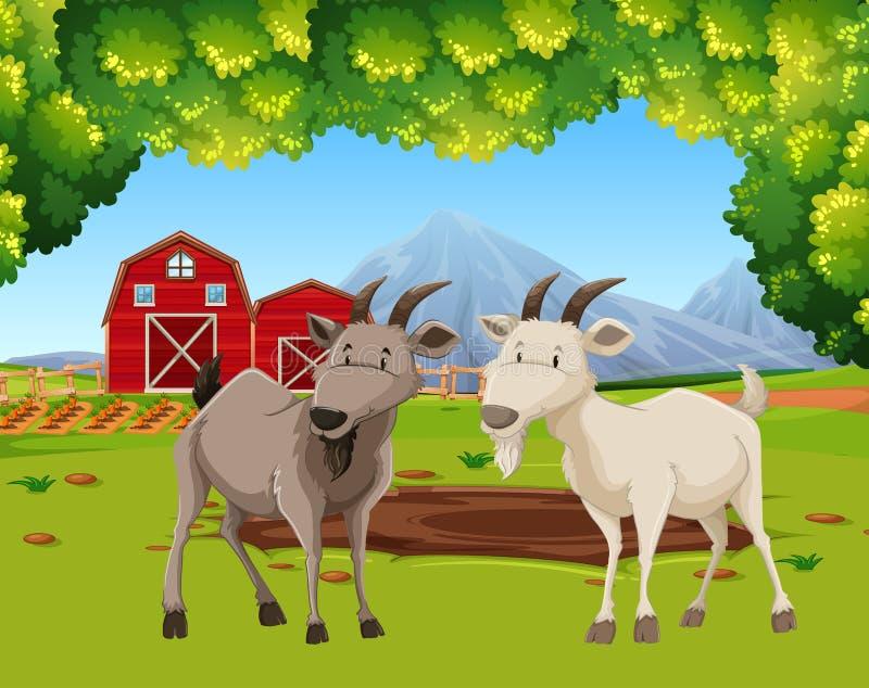 Dwa kózki w rolnej scenie ilustracja wektor