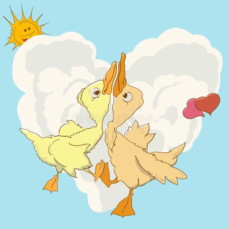 Dwa kaczek zawijas w miłość tanu zdjęcia stock
