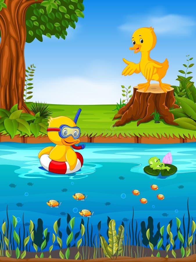 Dwa kaczka i żaba w rzece ilustracji