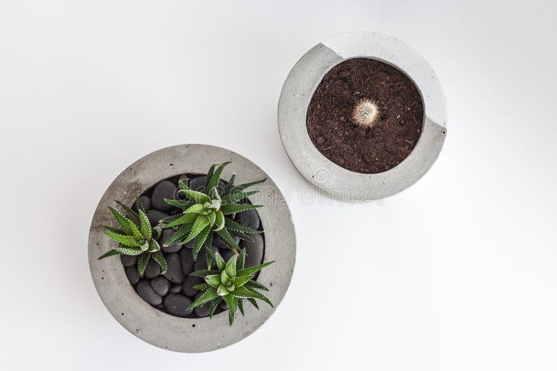 Dwa kaktus w betonowym garnku na widok obrazy stock