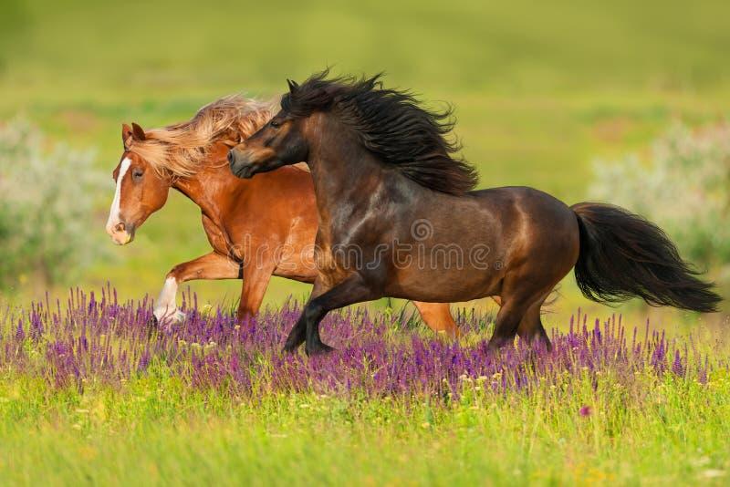 Dwa koń w kwiatach obrazy stock