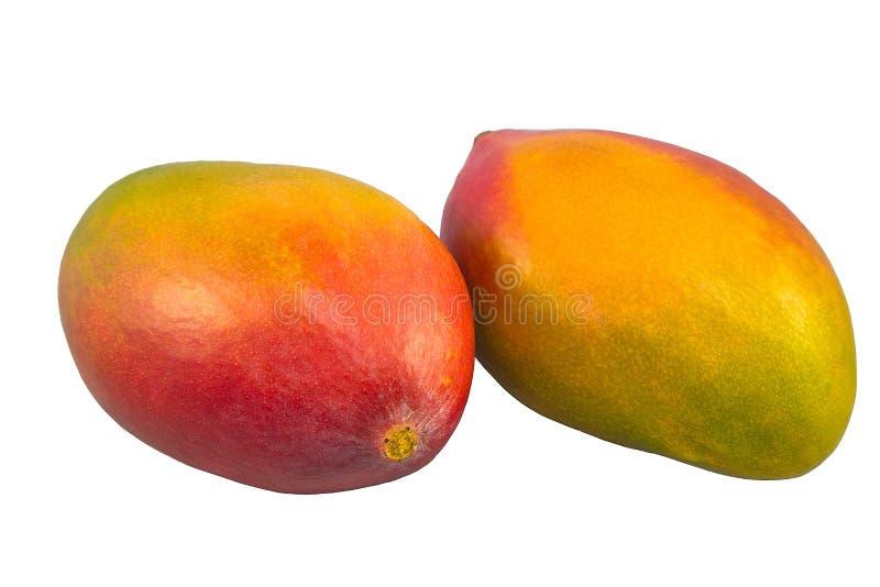 Dwa kolorów żółtych mango odizolowywający na białym tle zdjęcie royalty free