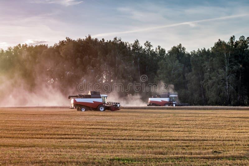Dwa kombinatorów rolnictwa maszyna zbiera dojrzałego pszenicznego pole fotografia stock