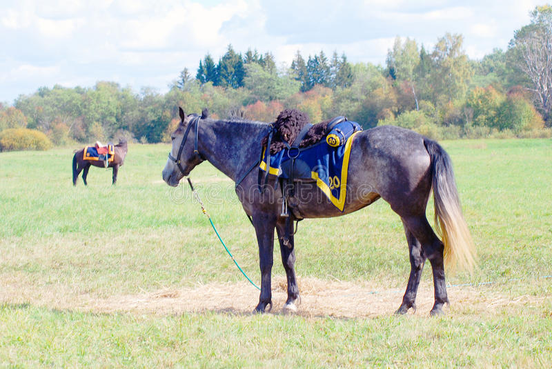 Dwa konia pasają na łące obrazy royalty free