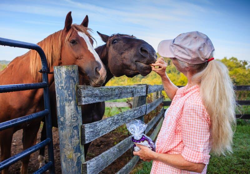 Dwa konia przy ogrodzeniem z kobietą obraz royalty free