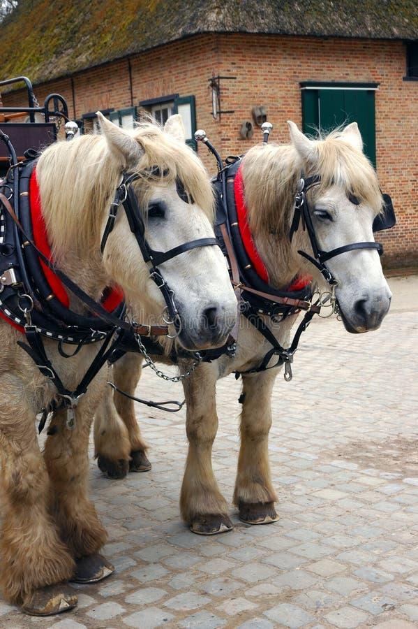 Download Dwa konie zdjęcie stock. Obraz złożonej z konie, turystyczny - 136612