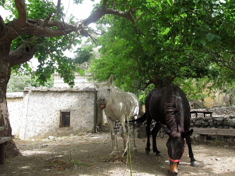 Dwa konie czarny I biaÅ 'y odpoczywajÄ… peul drzewem royalty-vrije stock afbeeldingen