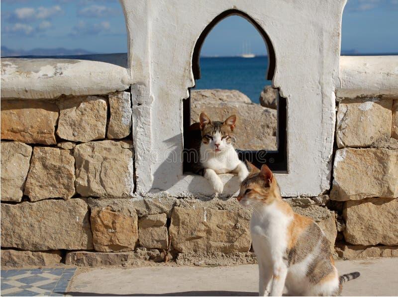 Dwa kotów relaksować zdjęcia royalty free