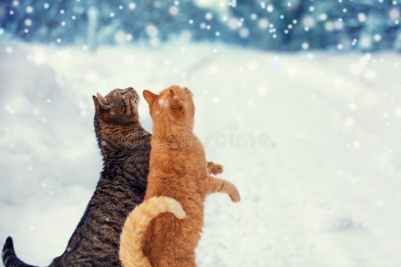 Dwa kotów spacer na śniegu podczas opadu śniegu fotografia royalty free