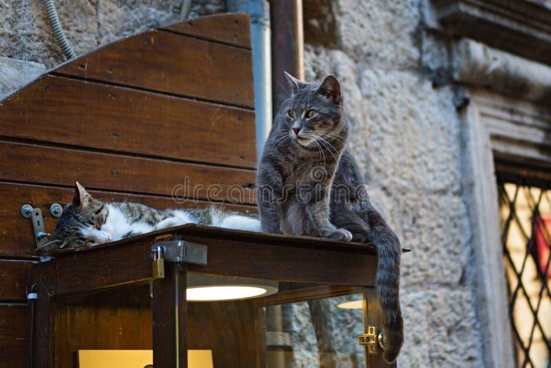 Dwa kota na ulicznej gablocie wystawowej obraz royalty free