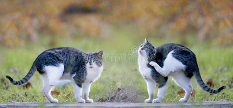 Dwa kota na ziemi zdjęcia royalty free