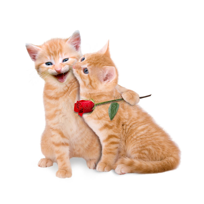 Dwa kota w miłości zdjęcie royalty free