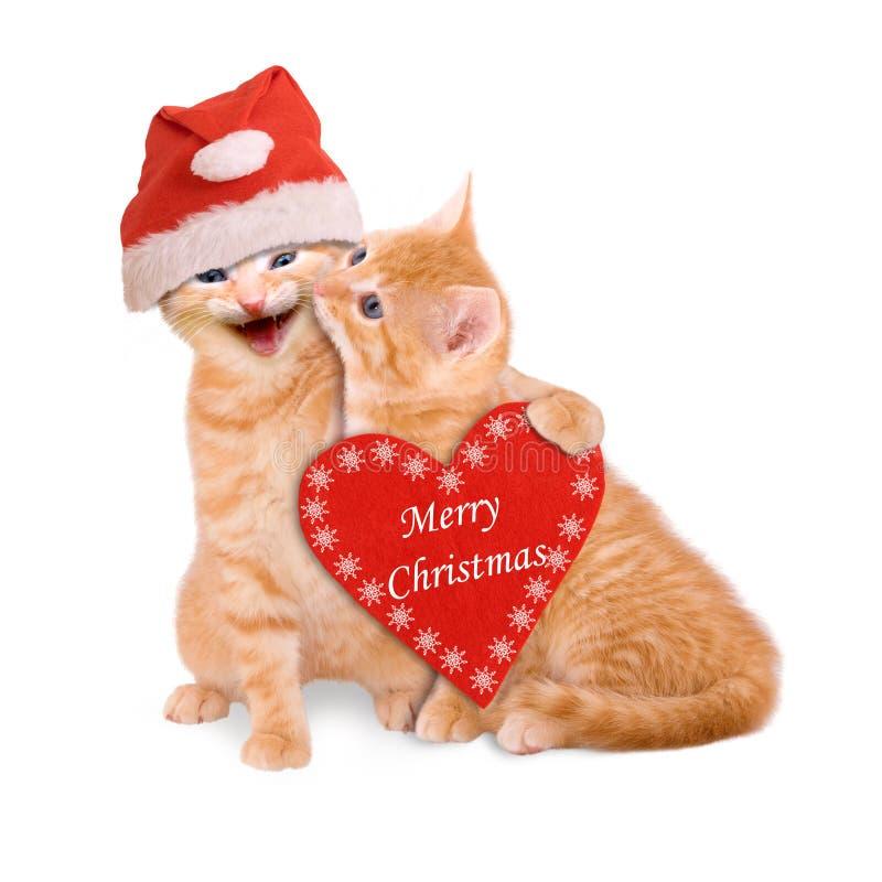 Dwa kota z Santa kapeluszem, życzy Wesoło boże narodzenia odizolowywających fotografia royalty free