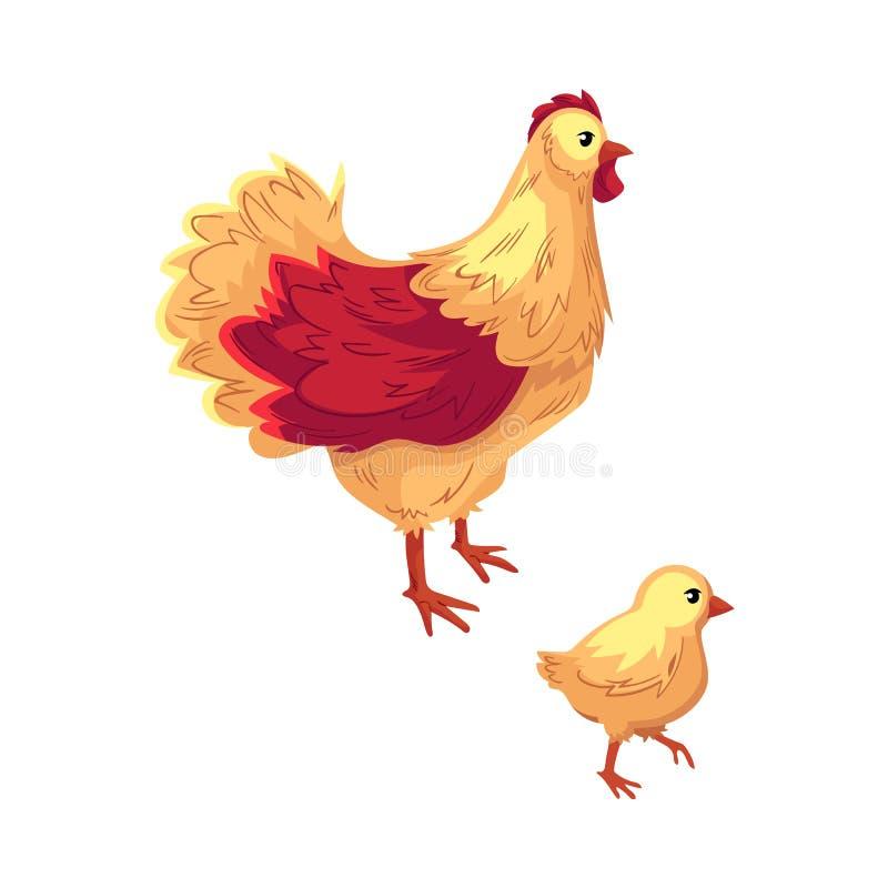 Dwa kreskówki śmieszny kurczak, karmazynka i dziecka kurczątko, royalty ilustracja