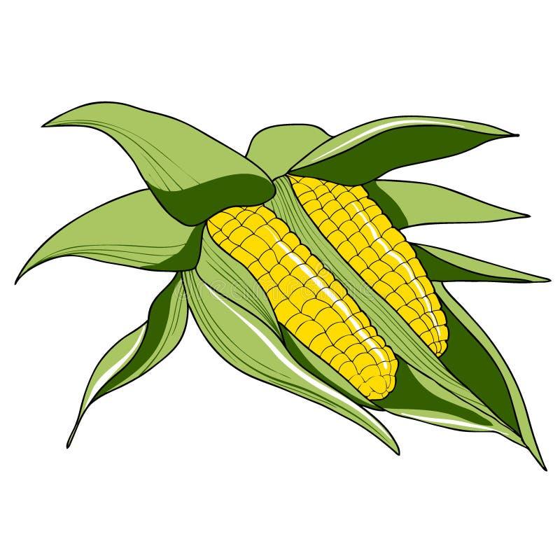 Dwa kukurydzany cob z liśćmi odizolowywającymi na białym tle wektor royalty ilustracja