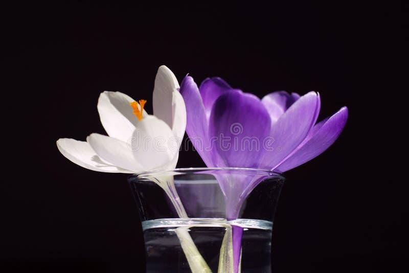 Dwa Kwiaty Obraz Stock