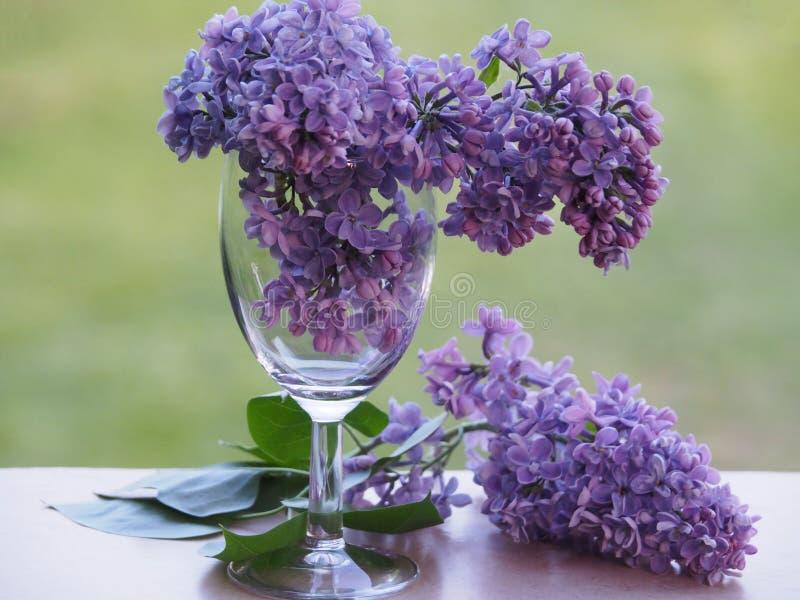 Dwa lilej gałąź w wina szkle i jeden na windowsill fotografia stock