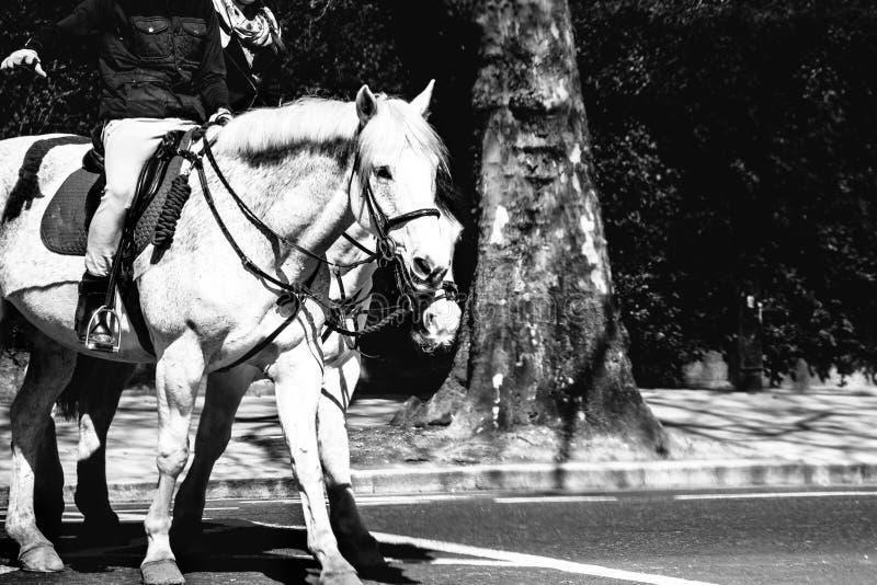 Dwa ludzie jedzie białych konie na pustej ulicie zdjęcie stock