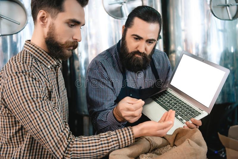 Dwa mężczyzna czeka brodata ilość jęczmienia słód podczas gdy w browarze Proces piwna produkcja fotografia royalty free
