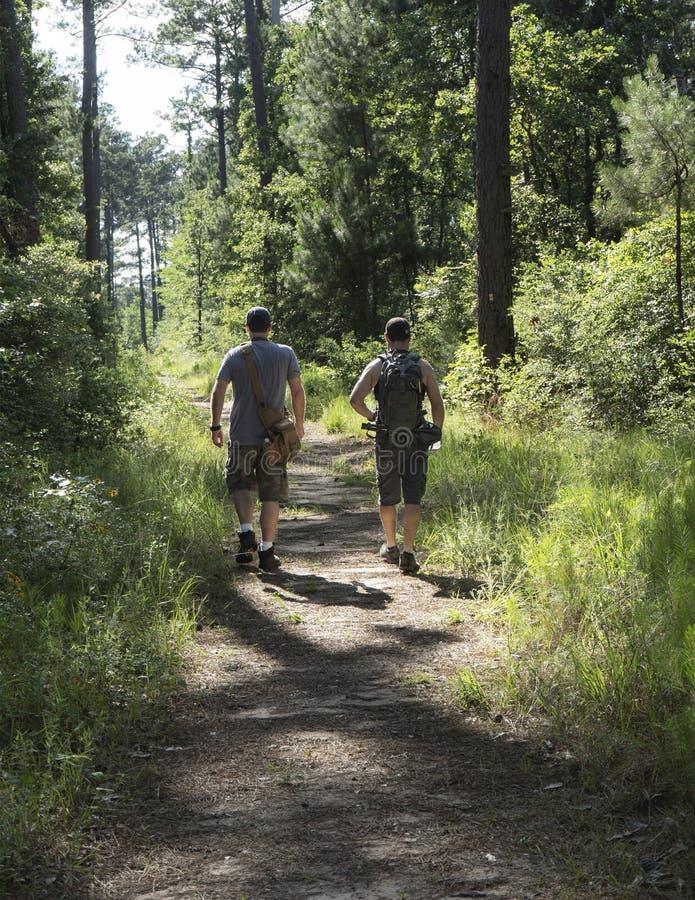 Dwa Męskiego wycieczkowicza Kończy podwyżkę W lesie państwowym zdjęcia royalty free