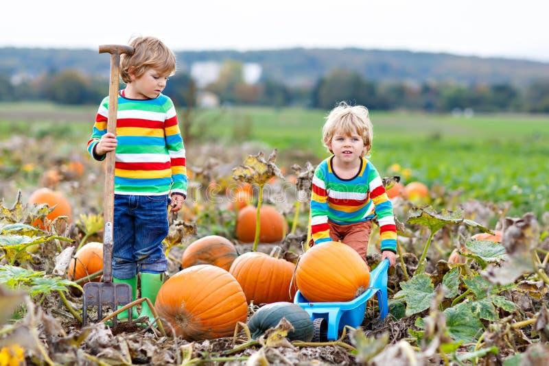 Dwa małe dziecko chłopiec podnosi banie na Halloween lub dziękczynienia dyniowej łacie zdjęcia stock
