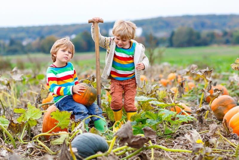Dwa małe dziecko chłopiec podnosi banie na Halloweenowej dyniowej łacie Dzieci bawić się w polu kabaczek Dzieciaki podnoszą dojrz obraz stock