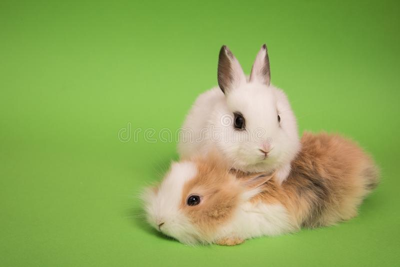 dwa małe króliczki obraz stock