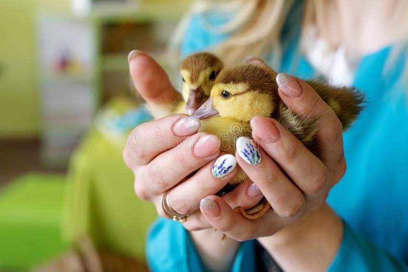 Dwa małego kaczątka w rękach matka i córka na zielonym tle zdjęcie stock