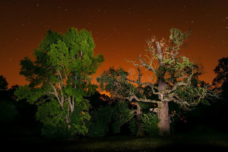 Dwa majestatycznego drzewa i nocne niebo fotografia stock