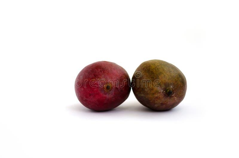 Dwa mango odizolowywający na białym tle obrazy stock