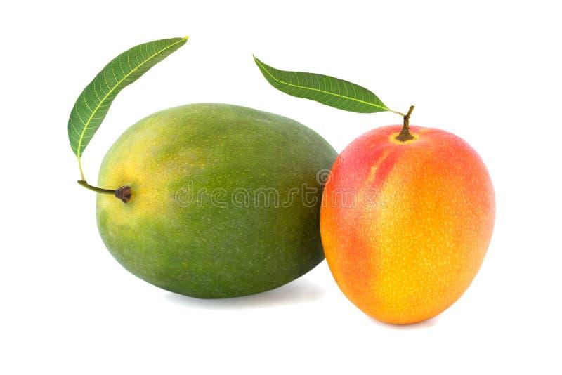 Dwa mango z liściem odizolowywającym na bielu obraz royalty free