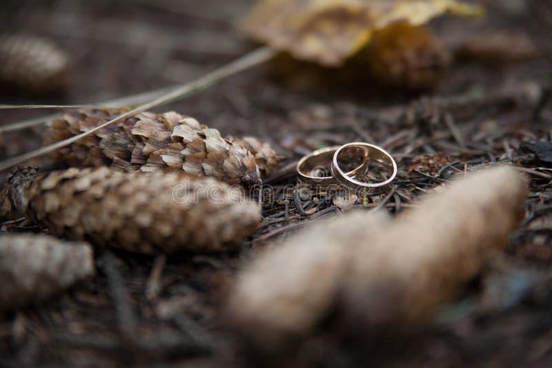 Dwa obrączki ślubnej w nieskończoność znaku na drewnie pocałunek miłości człowieka koncepcja kobieta zdjęcie stock