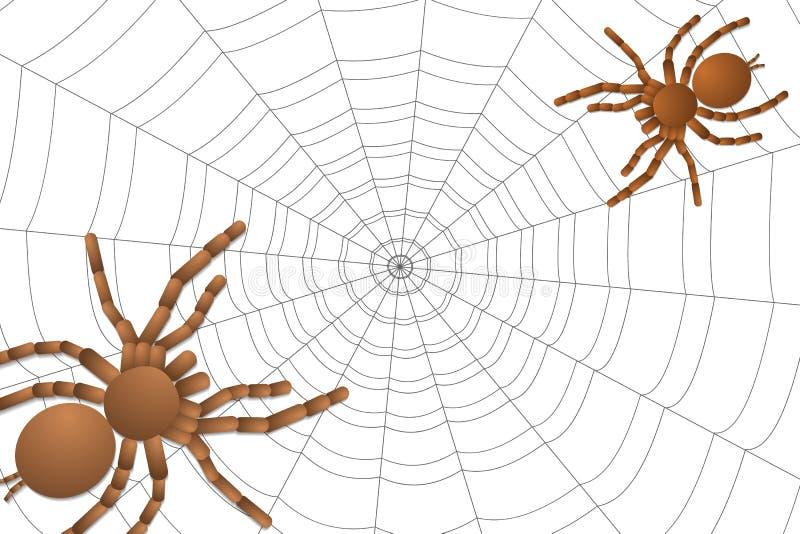 Dwa pająka tarantula na pajęczynie ilustracji