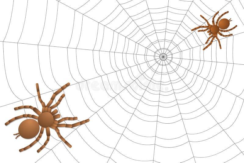 Dwa pająka tarantula na pajęczynie ilustracja wektor