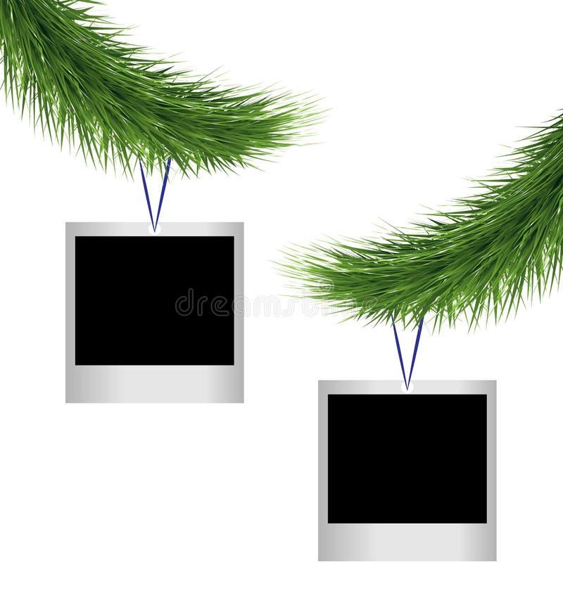Dwa photoframes na sosnowych gałąź ilustracja wektor