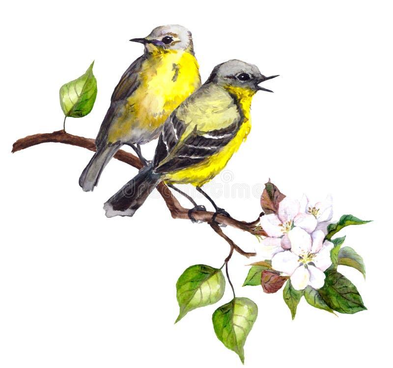 Dwa pieśniowego ptaka na wiośnie rozgałęziają się z liśćmi i kwiatami royalty ilustracja