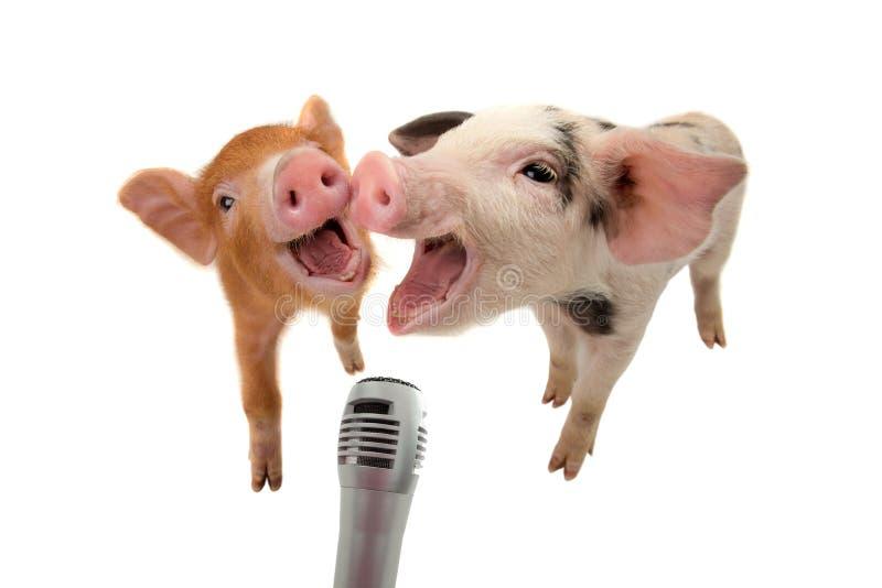 Dwa prosiaczek śpiewa w mikrofon zdjęcie stock