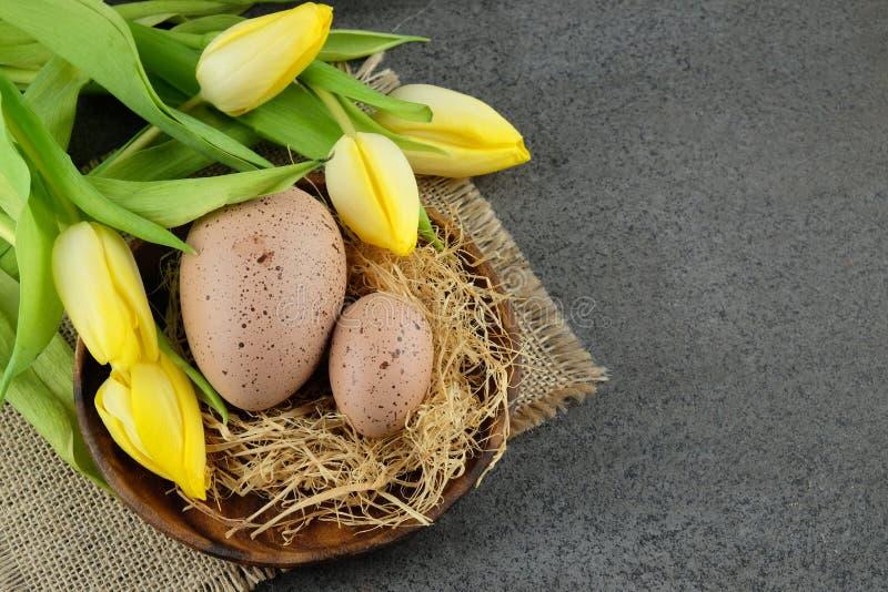 Dwa przepiórki Easter jajka i żółtych tulipany na ciemnym tle z zdjęcia royalty free